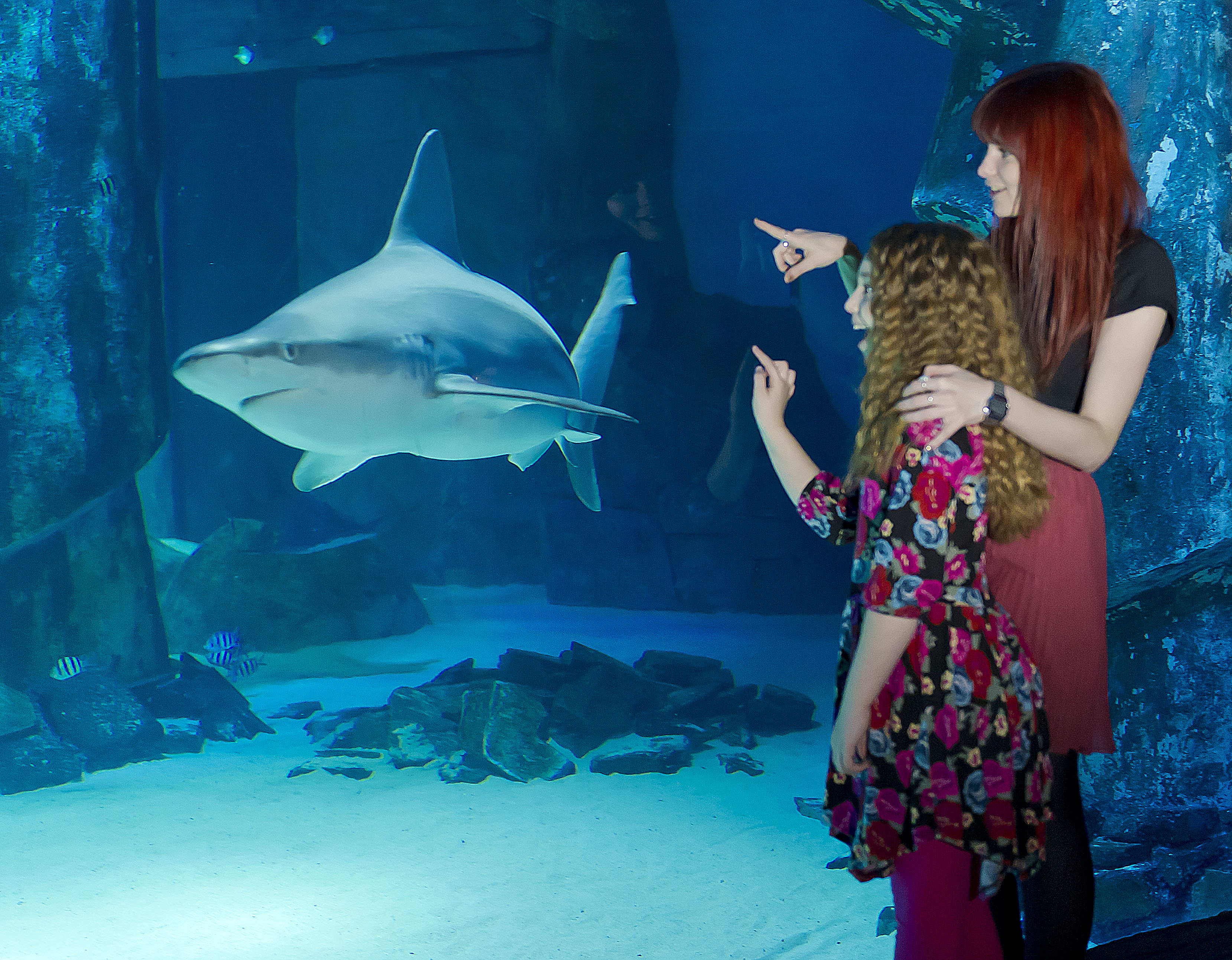 Buy fish for aquarium london - A Day Out At The London Aquarium And The London Eye
